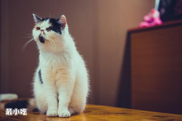 猫控们,喵星人来袭啦!平顶山首家猫咪咖啡馆插图7
