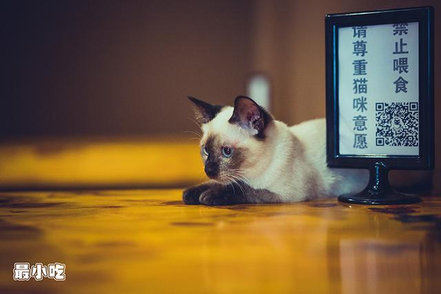 猫控们,喵星人来袭啦!平顶山首家猫咪咖啡馆插图3