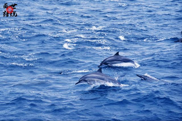 宜蘭龜山島賞野生鯨豚:有些魚是關不住的,註定要翱翔在火山周圍