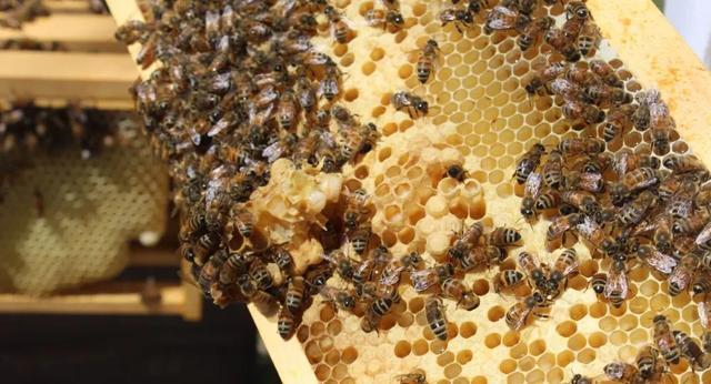前8月:乌国蜂蜜出口同比翻近5倍,药品出口同比翻3倍