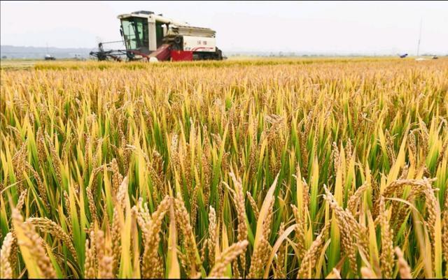 北斗、5G加持,水稻种植将实现机械化!【www.smxdc.net】 全球新闻风头榜 第2张