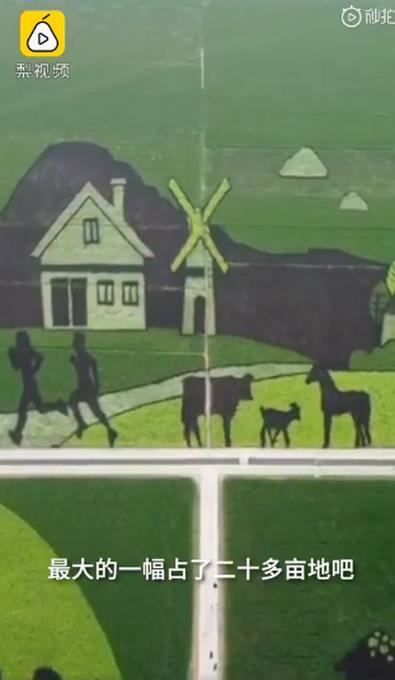 村民用5色水稻种出稻田画,GPS定位种400亩!网友:太美了