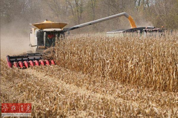外媒:中国签订一个月来最大单日美国玉米购买合同www.smxdc.net