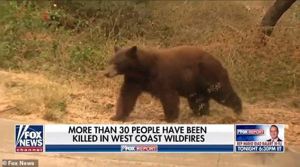 美国女记者正直播,一只熊飞奔而来,结局出人意料-第7张