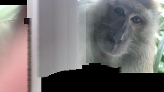 """""""神秘人""""入室偷窃?男子在失而复得的手机里发现了自拍照-第2张"""