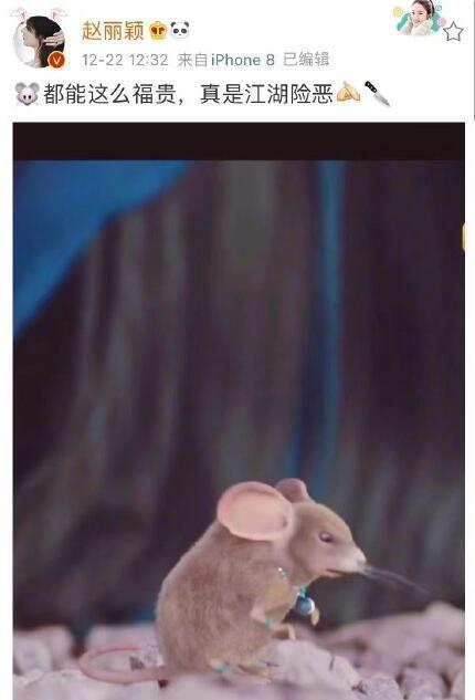 《有翡》粗制滥造?赵丽颖晒富贵老鼠照上热搜插图