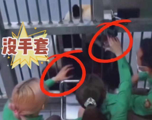 韩综又翻车?Blackpink违规接触熊猫幼崽,引发巨大争议 全球新闻风头榜 第4张