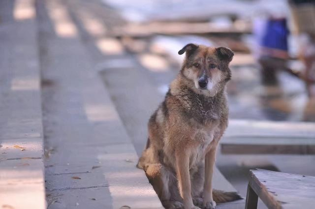 狂犬疫苗一针难求,哈尔滨\\ 全球新闻风头榜 第4张