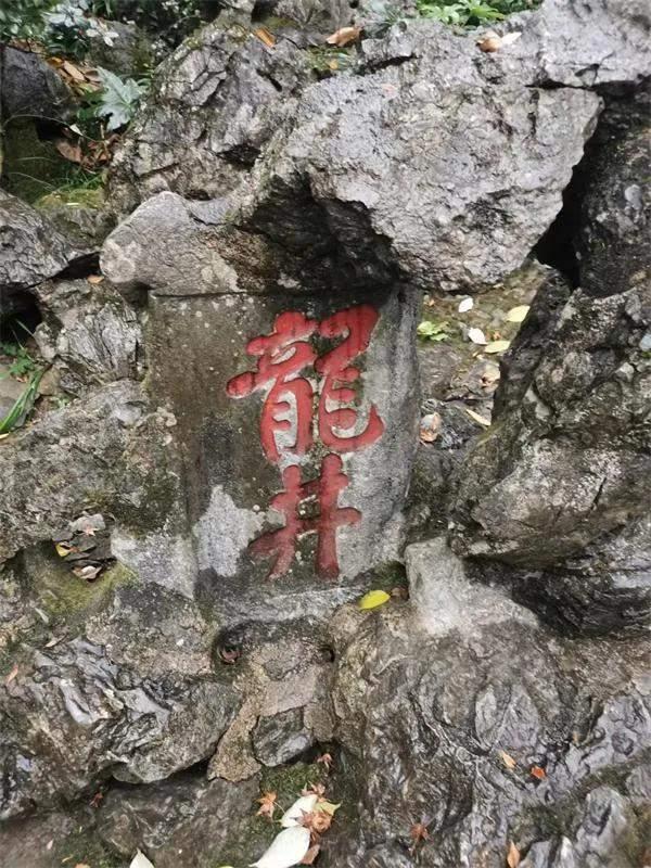 千年龙井旧事之探寻江南文化