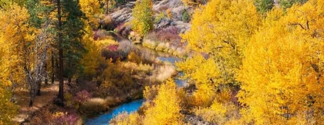 北加州的秋色可能不是最美的,但一定是最惬意的赏枫处