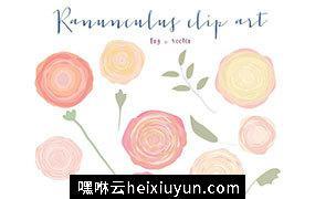 简单花卉素材 Ranunculus flowers clipart #190889