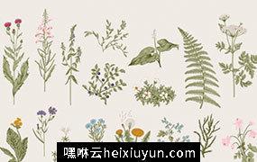 丰富多彩的古典花卉草本植物野花集合矢量插图设计素材Herbs and Wild Flowers