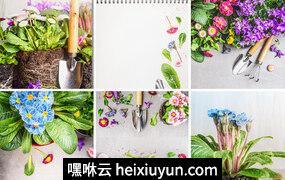 植物花卉园艺高清背景平面设计素材#062706