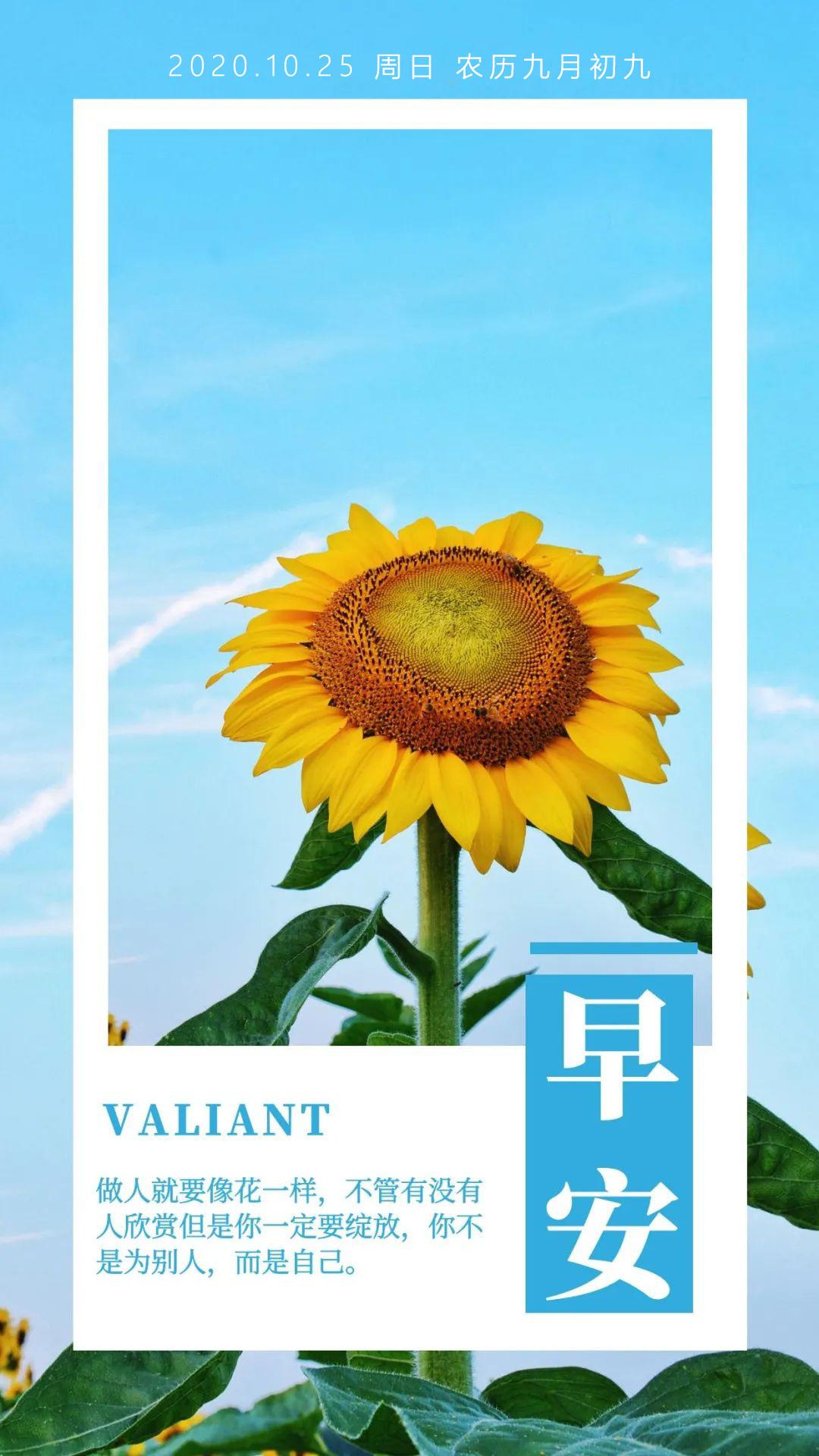 重阳节早上好正能量阳光问候语图片日签